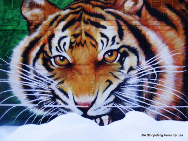 A tiger eating snow