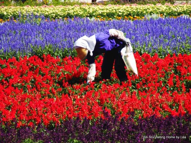 Flower fields in Nakafurano, Farm Tomita, Hokkaido, Japan