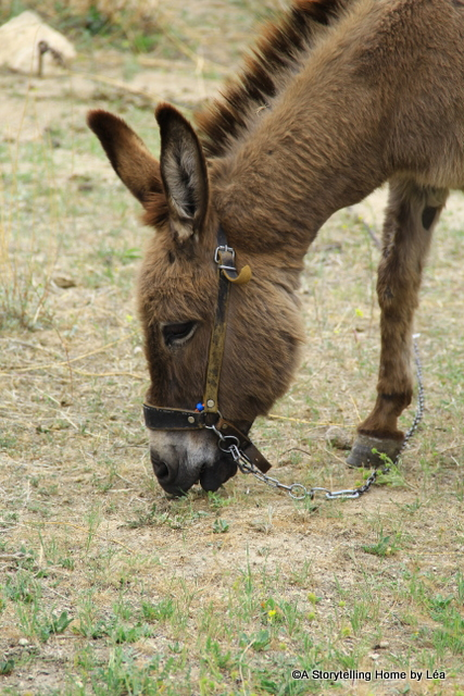 A donkey snacking on some dry grass